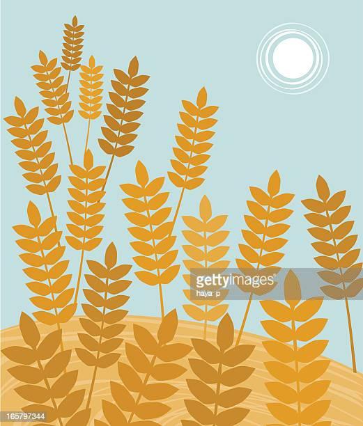 Oreilles de blé à récolter temps