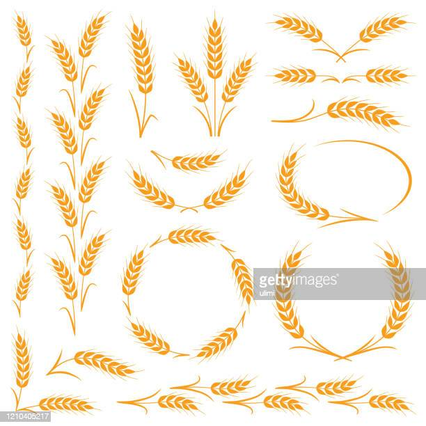 ilustraciones, imágenes clip art, dibujos animados e iconos de stock de orejas de trigo - espiga de trigo