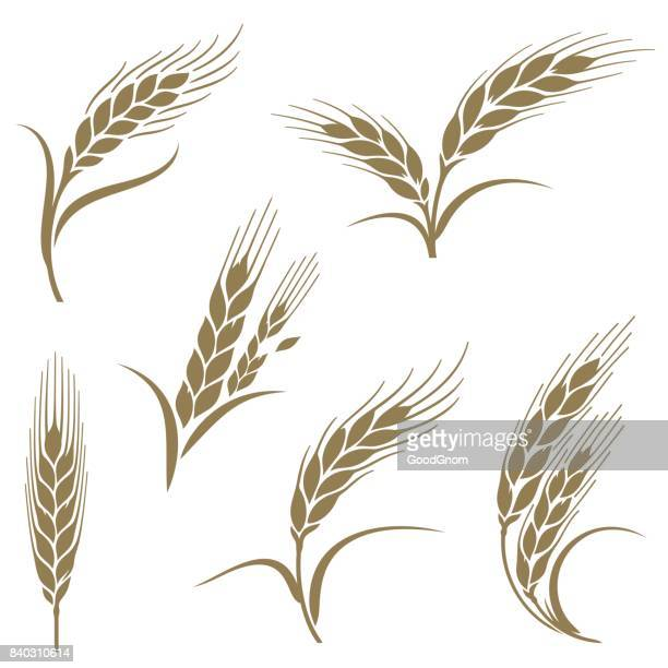 ears of wheat - breakfast cereal stock illustrations, clip art, cartoons, & icons