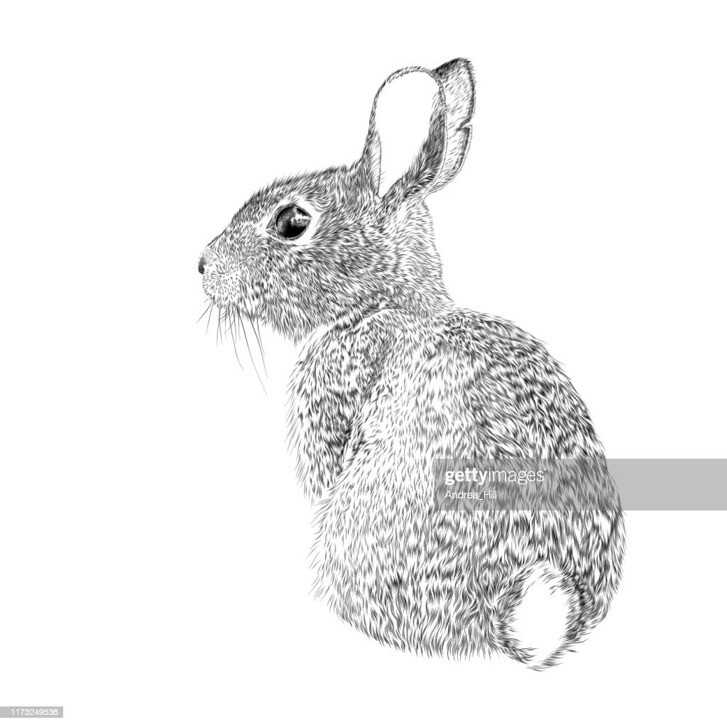 Easter Bunny Vector Ink Drawing : stock illustration