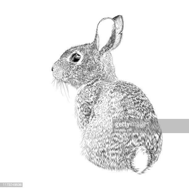 easter bunny vector ink drawing - animal stock illustrations