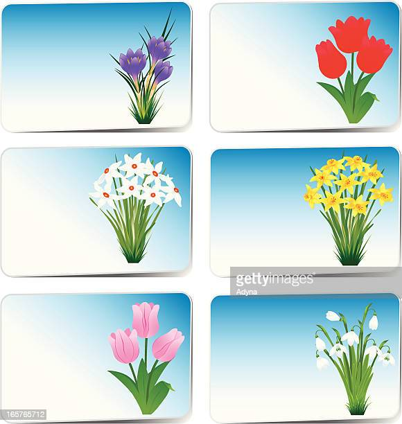 easter card - paperwhite narcissus stock illustrations, clip art, cartoons, & icons