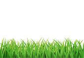 Easter grass border. Vector design isolated on white