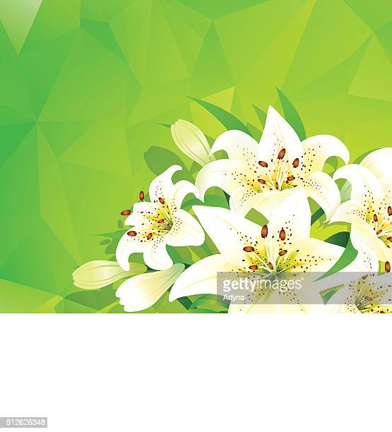 easter lily background - easter lily stock illustrations
