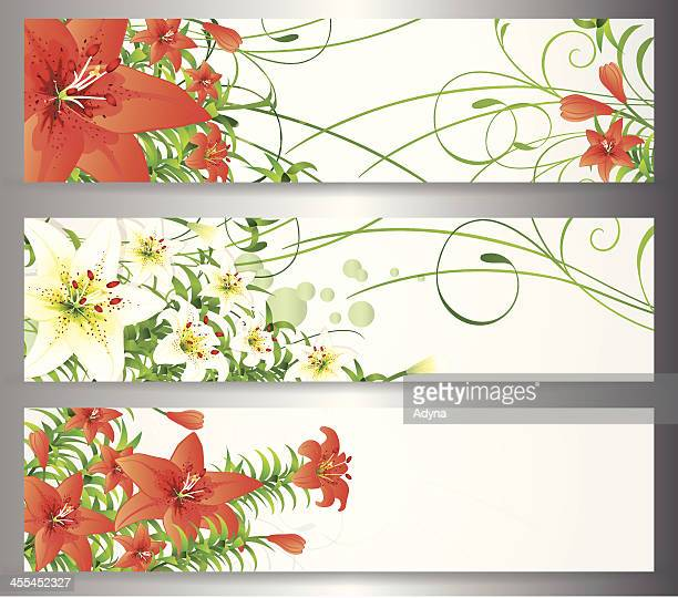 easter lily banner - easter lily stock illustrations