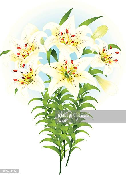 easter lily - easter lily stock illustrations