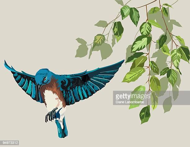 Eastern Bluebird & Birch