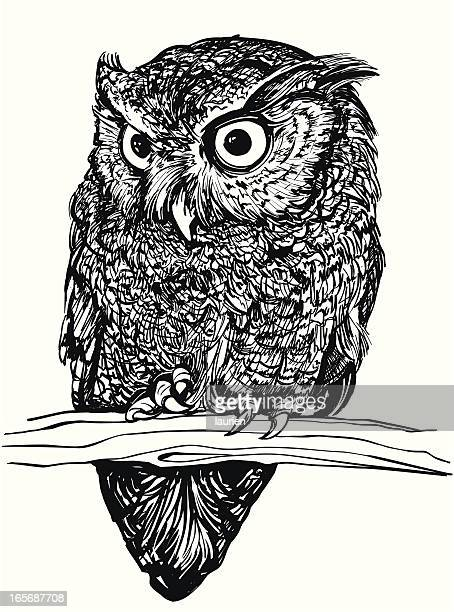 eastern screech owl - owl stock illustrations, clip art, cartoons, & icons