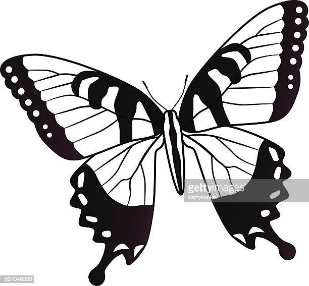 Eastern tiger swallowtail North American butterfly
