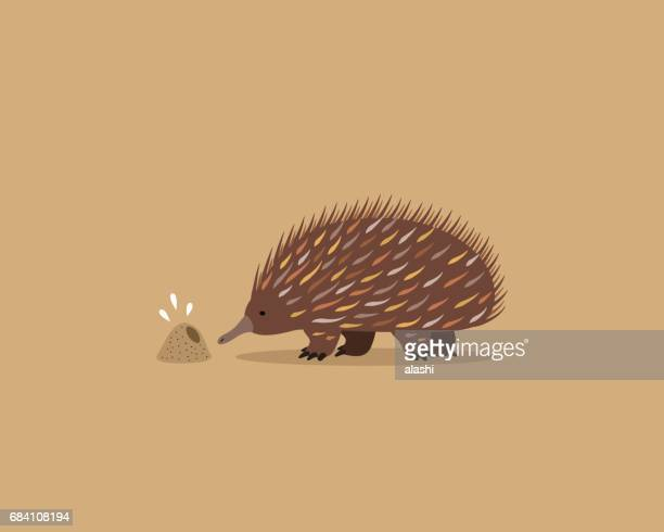 echidna and ant hole (colony) - echidna stock illustrations