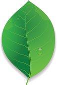 Eco Green Leaf