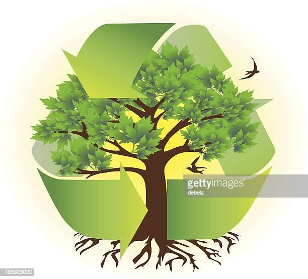 eco tree - photosynthesis stock illustrations