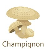 Edible mushrooms flat icon. Champignon. Vector illustration.