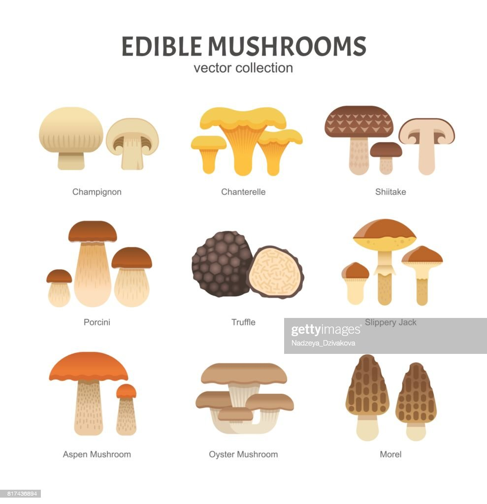 Edible mushrooms set.