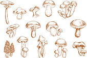 Edible mushrooms sketches for food design