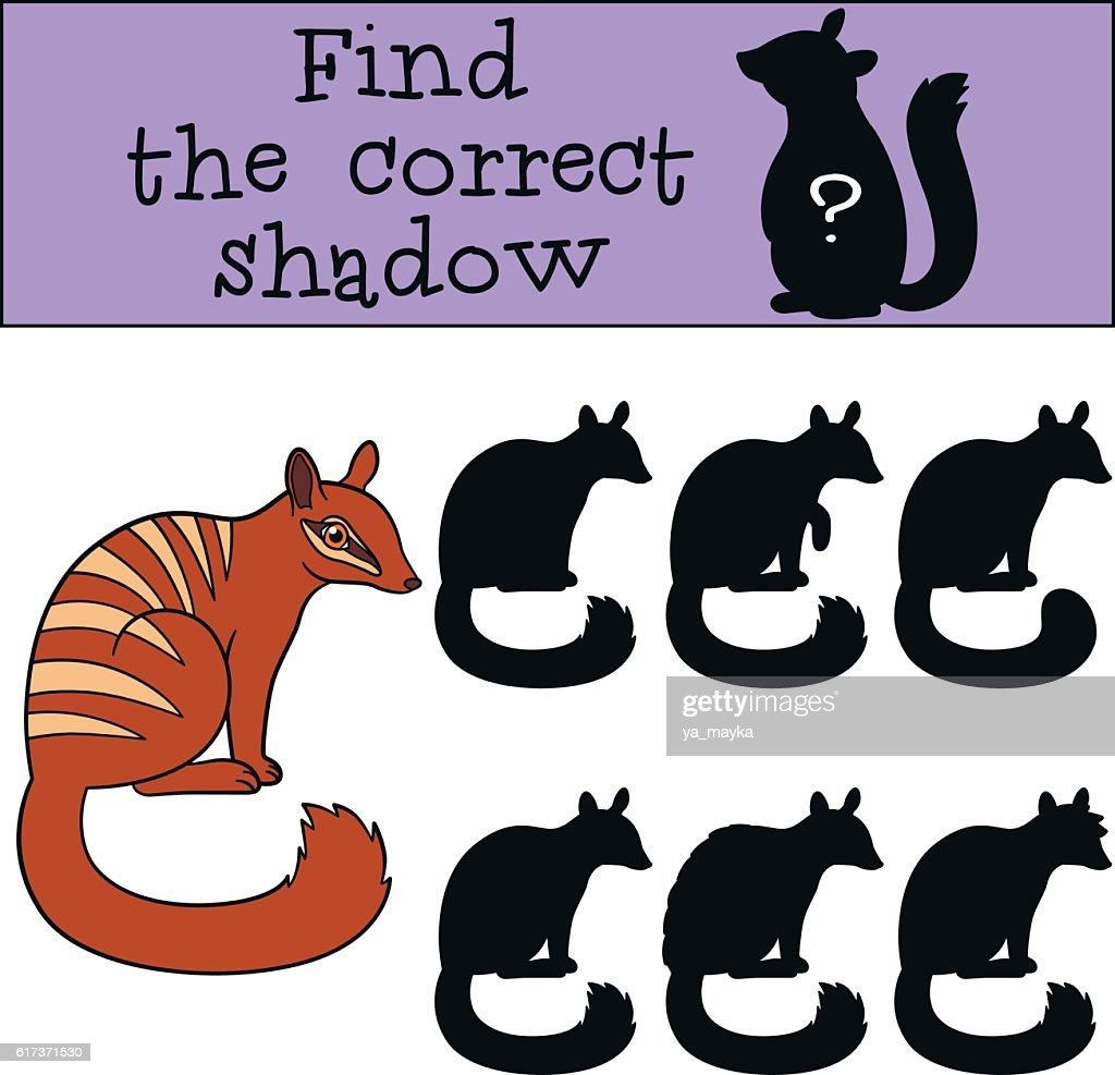 Educational game: Find the correct shadow. Little cute numbat sm