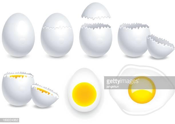 ilustraciones, imágenes clip art, dibujos animados e iconos de stock de huevo - huevo etapa de animal