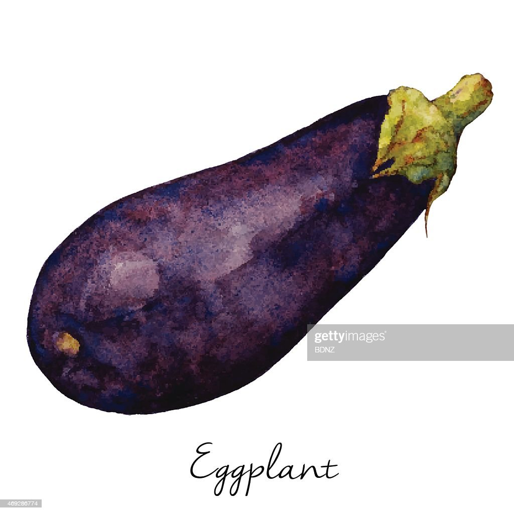 Eggplant Watercolor Sketch, Vector Illustration.