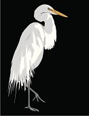 Egret on Black