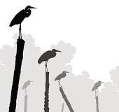 Egret perches