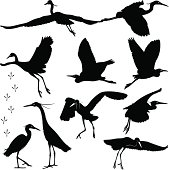 Egrets Silhouettes - Illustration