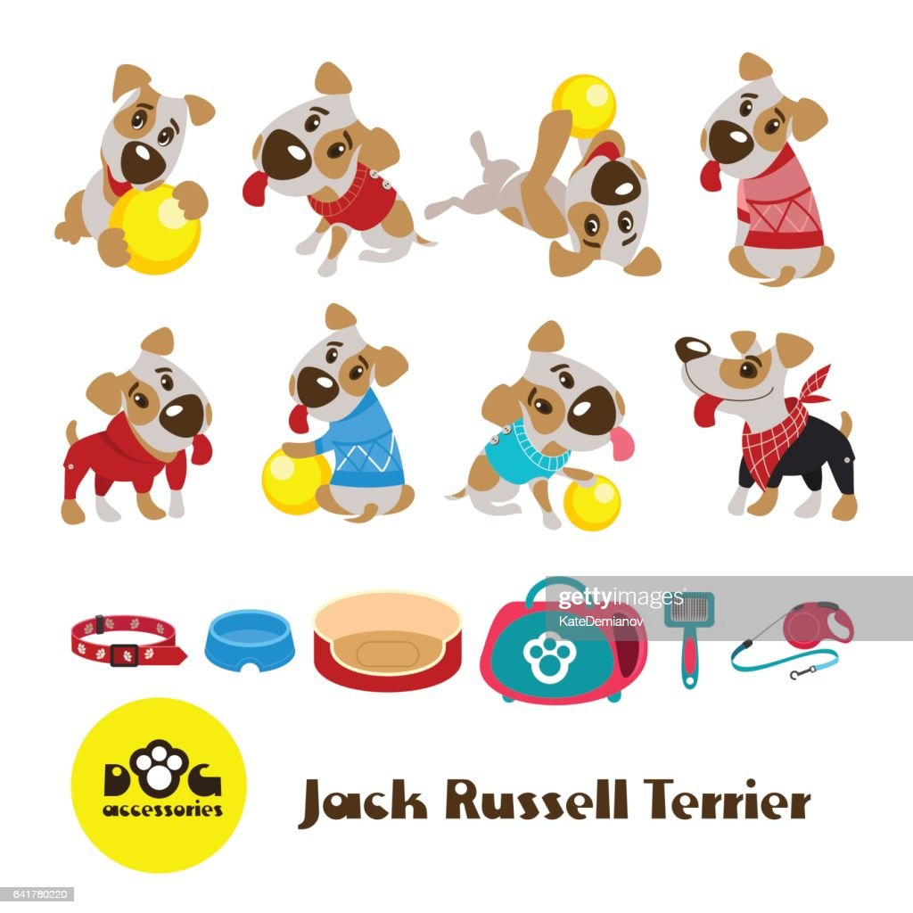 Eight funny dogs Jack Russell Terrier in clothes. Clothing and accessories for dogs.