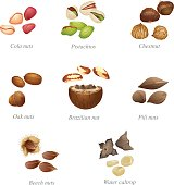 Eight named nuts and their peeled kernels. Part two
