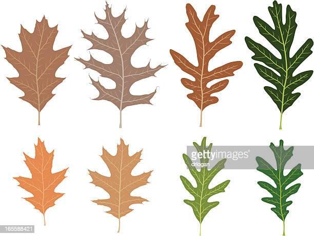8 つの個性豊かなオークの葉 - オークの葉点のイラスト素材/クリップアート素材/マンガ素材/アイコン素材