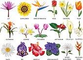 Eighteen Species of colorful flowers