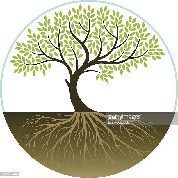 elegant bent tree - root stock illustrations, clip art, cartoons, & icons
