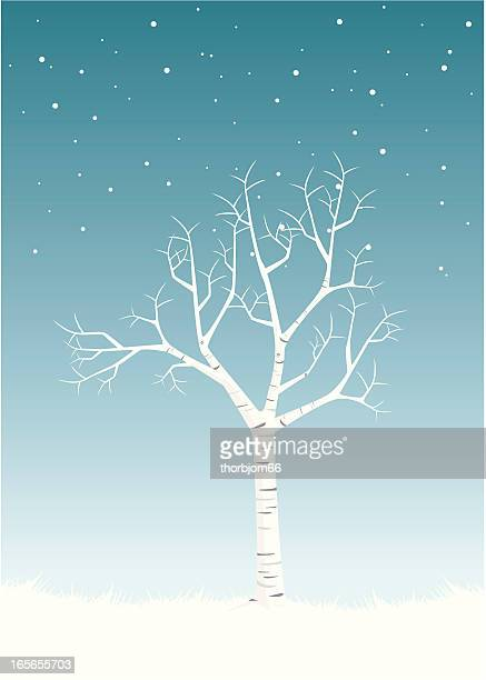 Elegant Birch Winter