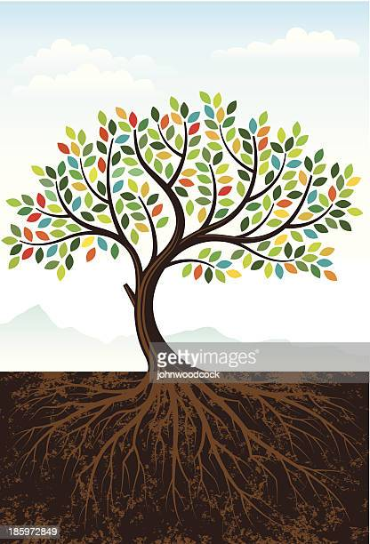 elegant colourful tree - root stock illustrations, clip art, cartoons, & icons