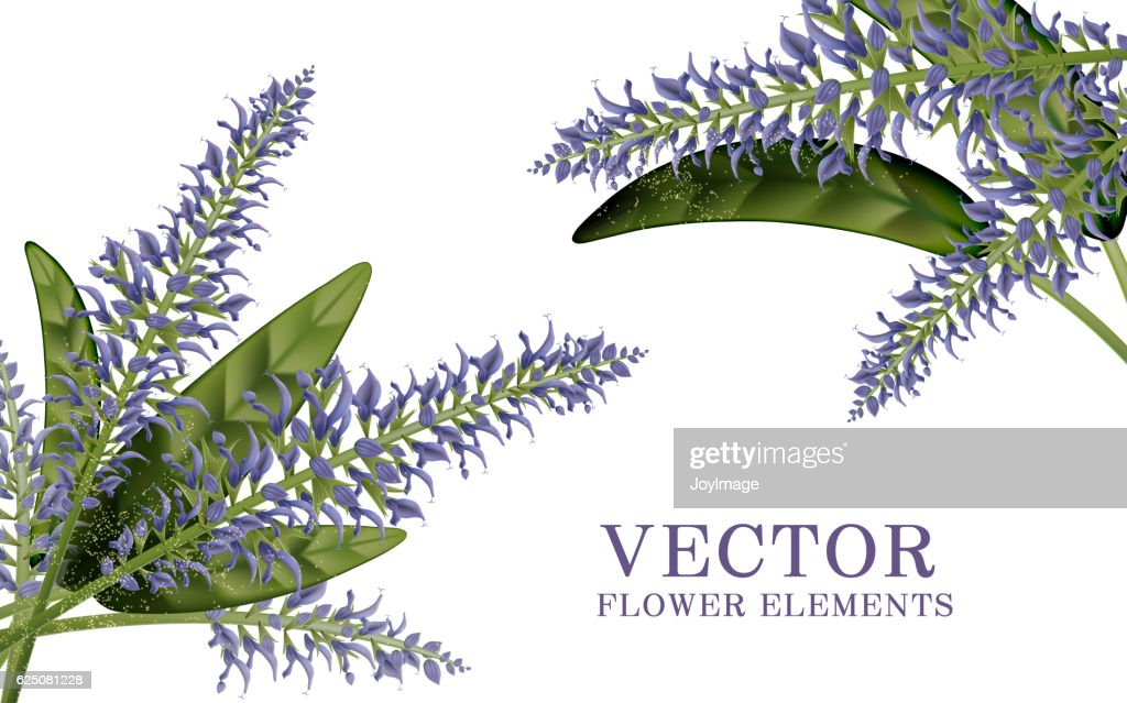Elegant salvia elements