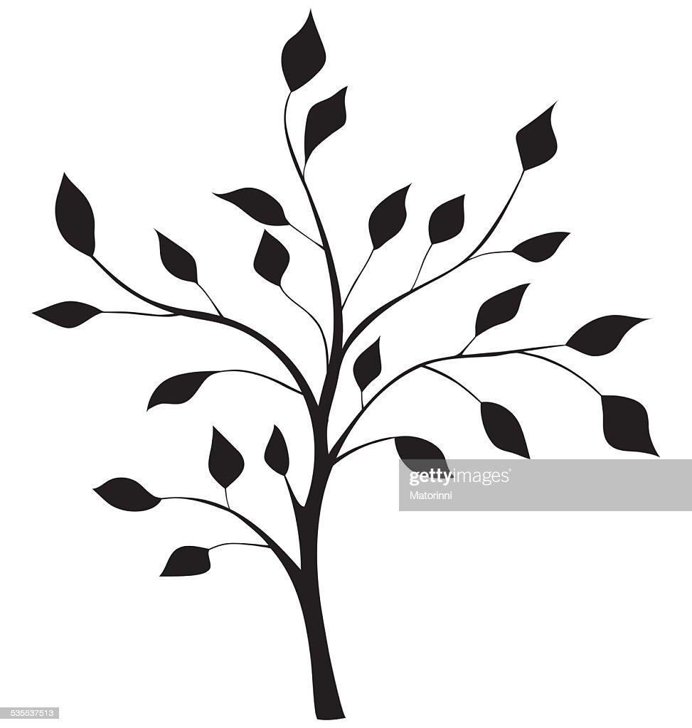 elegant silhouette of a tree