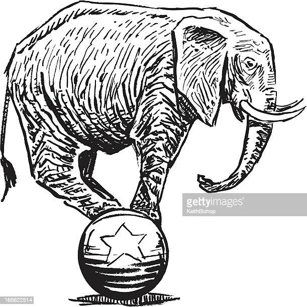 Elephant Balancing on Ball - Circus or Politics
