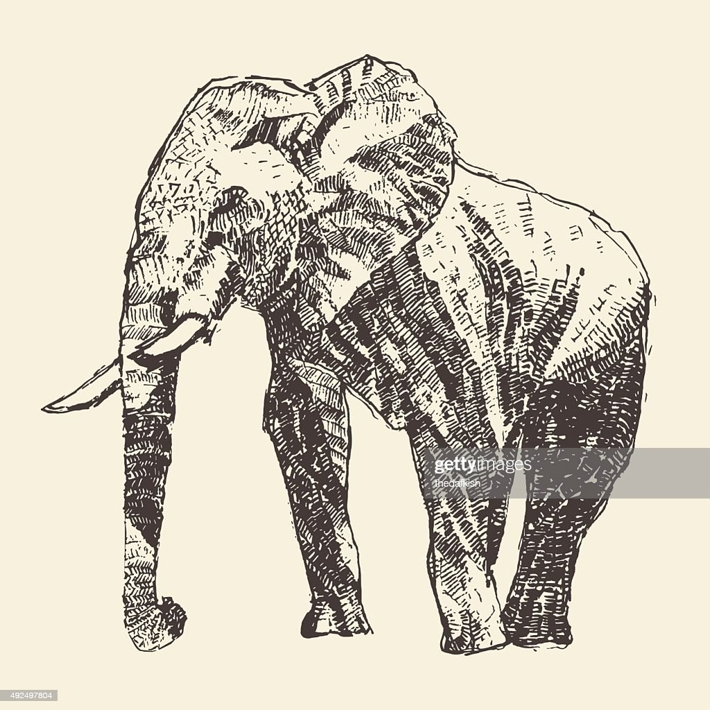 Elephant engraving illustration hand drawn sketch