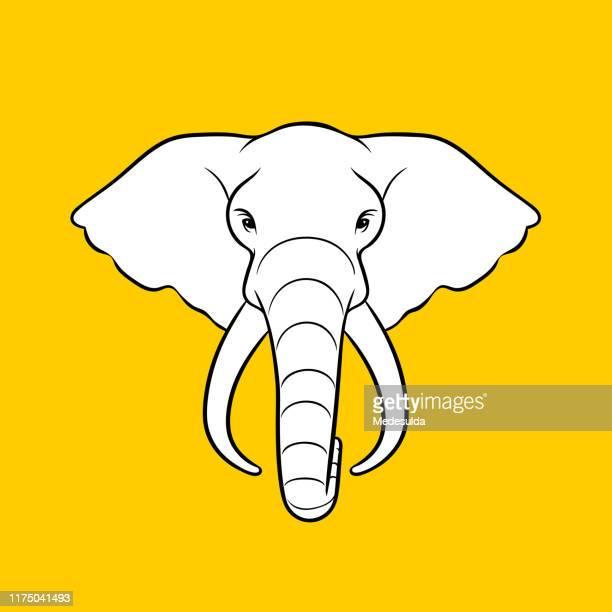 elephant head - animals in the wild stock illustrations