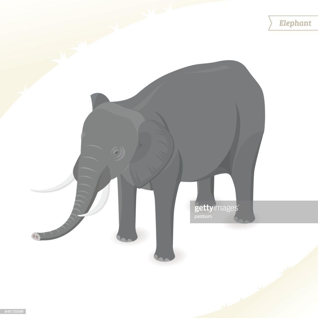Elephant isolated on white background.