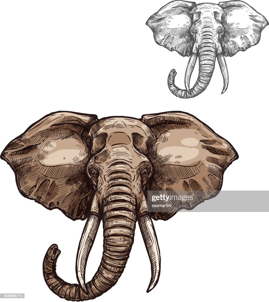 Elephant isolated sketch of african mammal animal