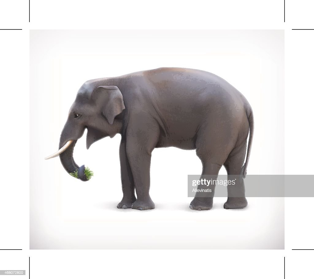 Elephant, vector illustration