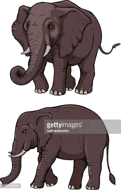 ilustrações de stock, clip art, desenhos animados e ícones de elefantes - elefante