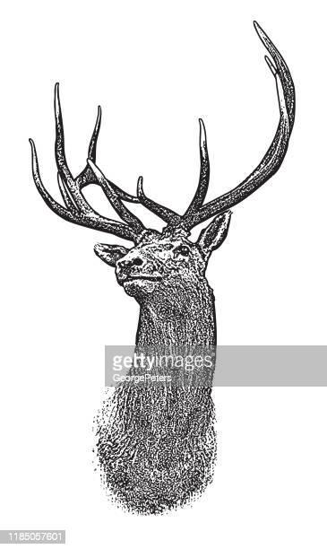 elk head - stag stock illustrations