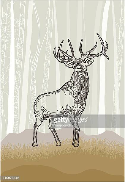 elk in the grasslands forest - bucks stock illustrations