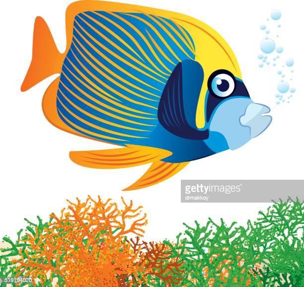 emperor angelfish - angelfish stock illustrations, clip art, cartoons, & icons