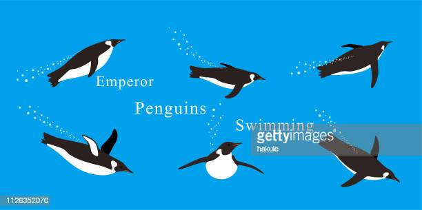 emperor penguins swimming in the sea with various postures. - iceberg ice formation stock illustrations