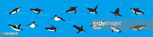 emperor penguins swimming in the sea with various postures. - antarctica stock illustrations, clip art, cartoons, & icons