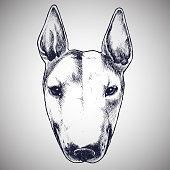 English bull terrier portrait.