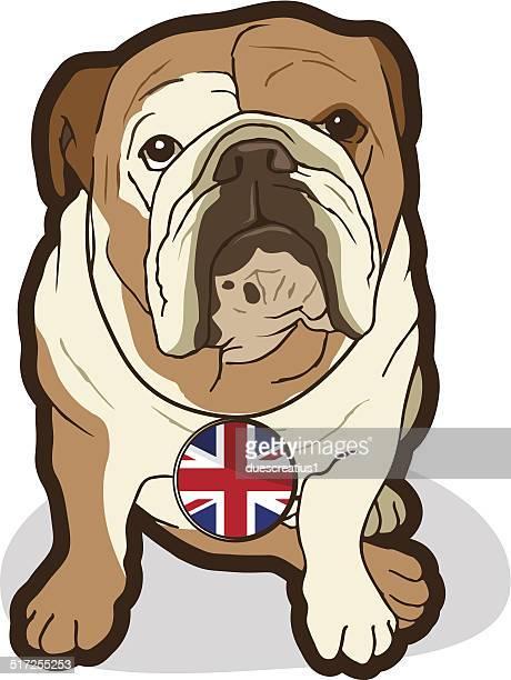 english bulldog - english bulldog stock illustrations