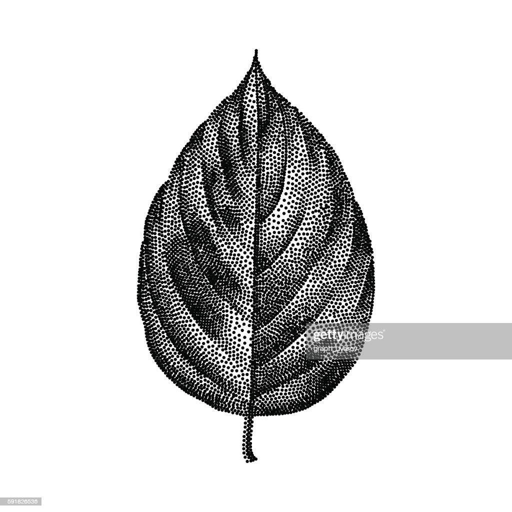 Engraving Birch Leaf Hand Drawn Vector Illustration