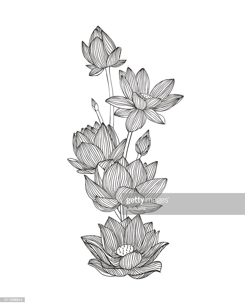Engraving hand drawn illustration of flower lotus.